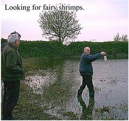 Jim looking for Fairy Shrimps in one of the pingo ponds.  Being translucent as their name suggests they are difficult to see.